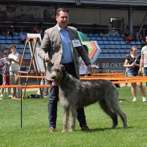 International DogShow GORZOW WIELKOPOLSK (Polen)