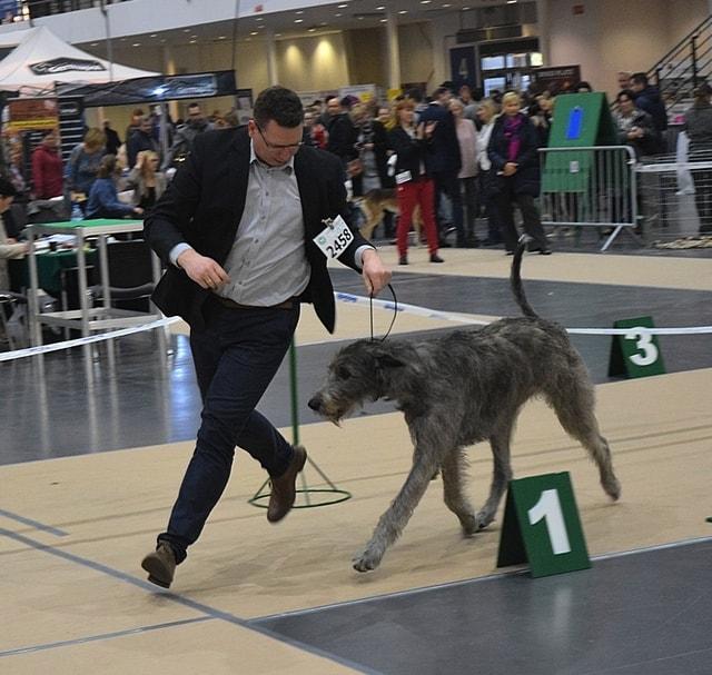 International DogShow Posen (Polen)