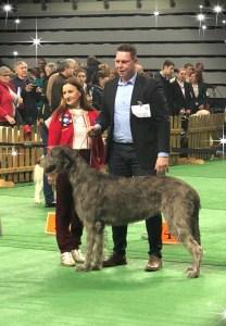 International DogShow Lubin (Polen)